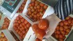 продаємо томати з Іспанії