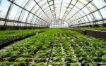 Вакансія — співробітник парникових теплиць