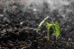 Комплексний аналіз ґрунту