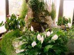 Зимовий сад - підбір рослин та догляд за ними