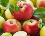 Яблука оптом.