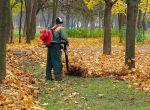 В Польщу на прибирання парків потрібний чоловік.