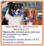 Оформление ветеринарных документов на животных