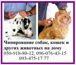 Чипирование собак, кошек и других животных на дому