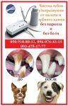 Ультразвуковая чистка зубов у собак и кошек        Чистка зу