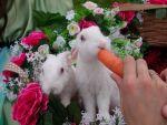 Фотосесія з весільними кроликами