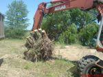 Аварійний спіл дерев, видалення аварійних дерев Київ. Підрізка дерев.