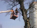 Спіл дерев і підрізування гілок.