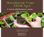 А чим ви обробляєте насіння для розсади?