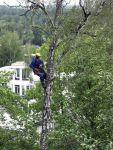 Видалення дерев, вирубка, спіл, валка, кронування дерев, Київ