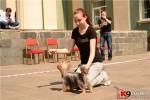 Онлайн-Дресирування цуценят і собак