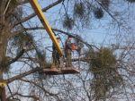 Провесійне зрізання дерев