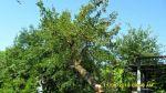 Валка дерев, корчування пнів, прибирання. Донецьк