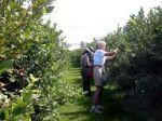 Потрібні робітники на збір ягоди