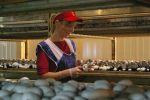 Потрібні жінки на збір грибів!