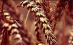 Послуги по відбору зразків сільгосппродукції.