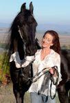 Новий фризької коні в наявності для продажу