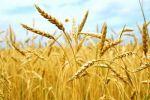 Продам участки сельхоз назначения