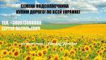 насіння соняшнику дорого Україна