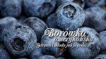 Збір ягоди в Польщі
