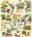 Закупляємо дорого лікарські рослини