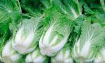 На овочебазу в Польщі, потрібні робітники
