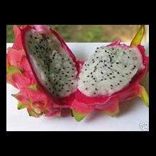 Питайя, питахайя, плодоносящий кактус