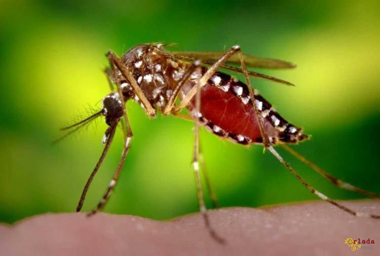 Уничтожение насекомых, грызунов - фото
