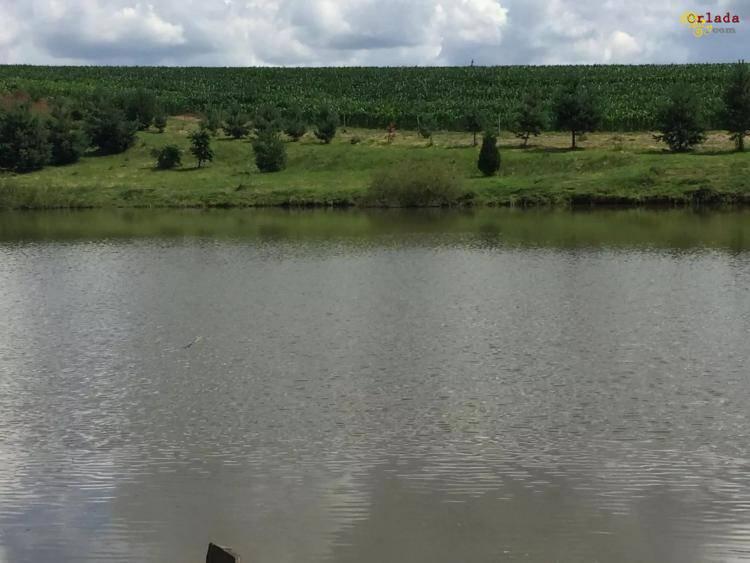 Купить участок Львов. Продам земельну дялянку, від Львова 70 км, 5 га землі, 6 джерел! - фото