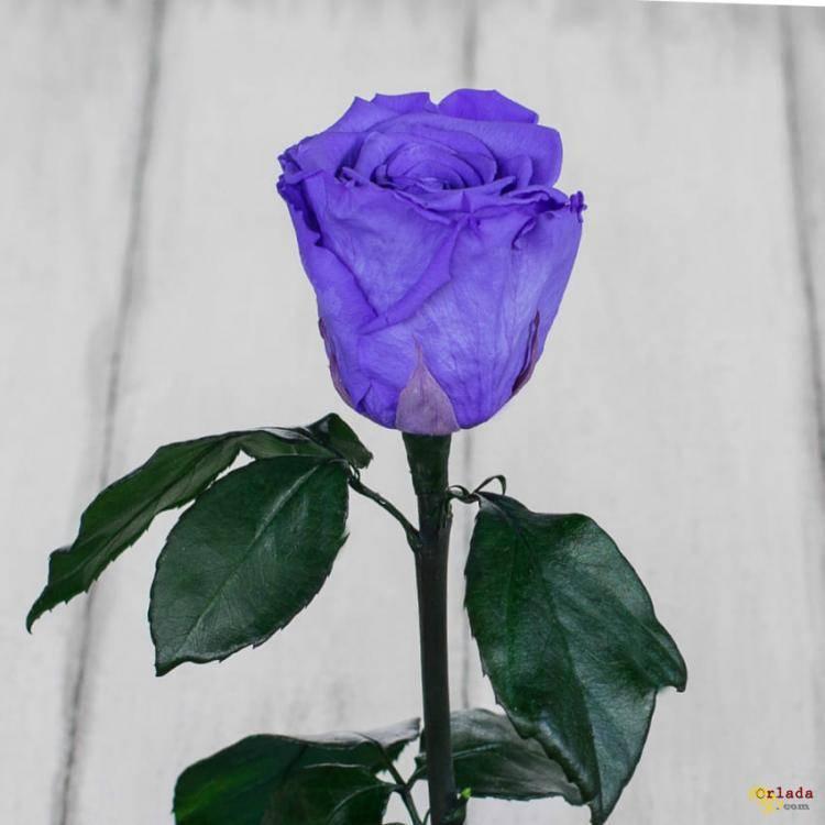 Роза в колбе - фото