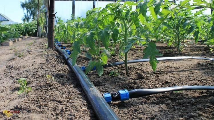✅  Агро Центр «B&S Product» || Купить семена Каланчак || Капельное Орошение. - фото