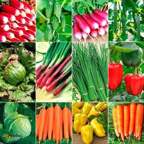"""Семена. Большой выбор.Агроцентр""""B&SProduct"""" - фото"""