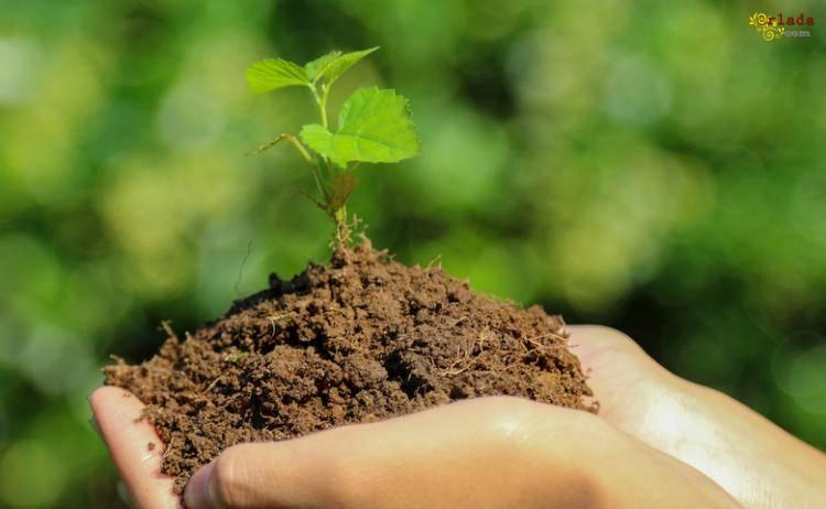 Инсектициды, акарициды. Средства защиты растений. Широкий ассортимент - фото