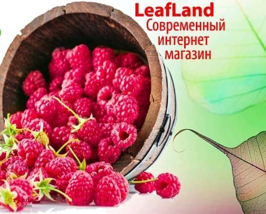 Купить саженцы почтой от магазина Leafland - фото