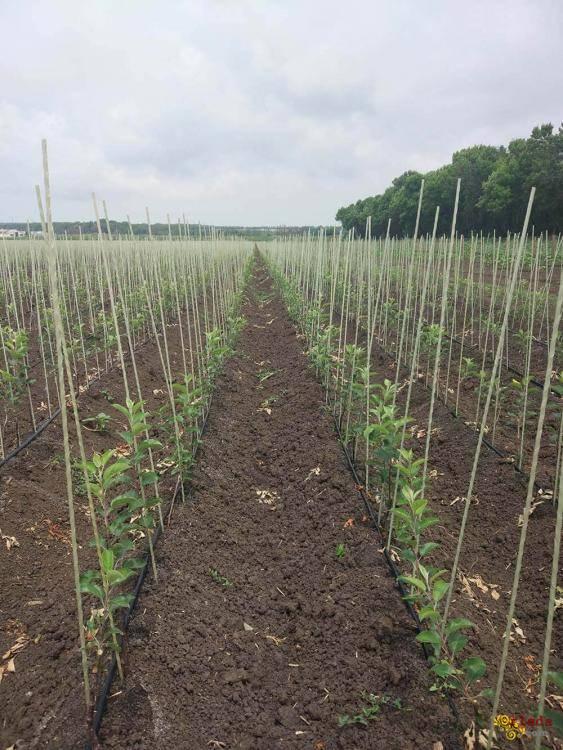 Колышки и опоры для растений POLYARM - фото