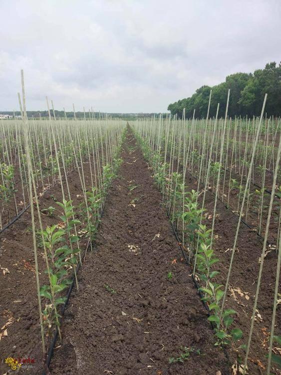 Опоры колышки для растений из композитных материалов POLYARM - фото