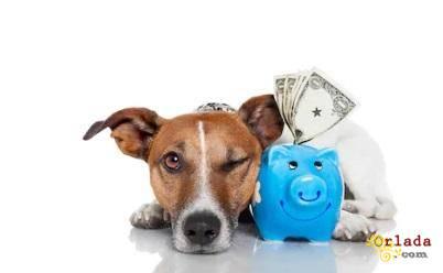 Кредит под залог квартиры, дома под 1,5% в месяц. - фото