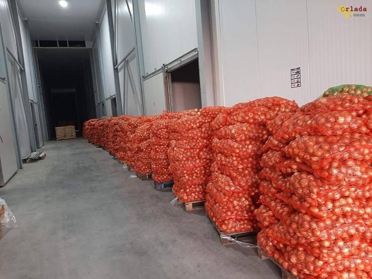 Морковь, капуста, лук, свекла продам оптом в Тернополе - фото