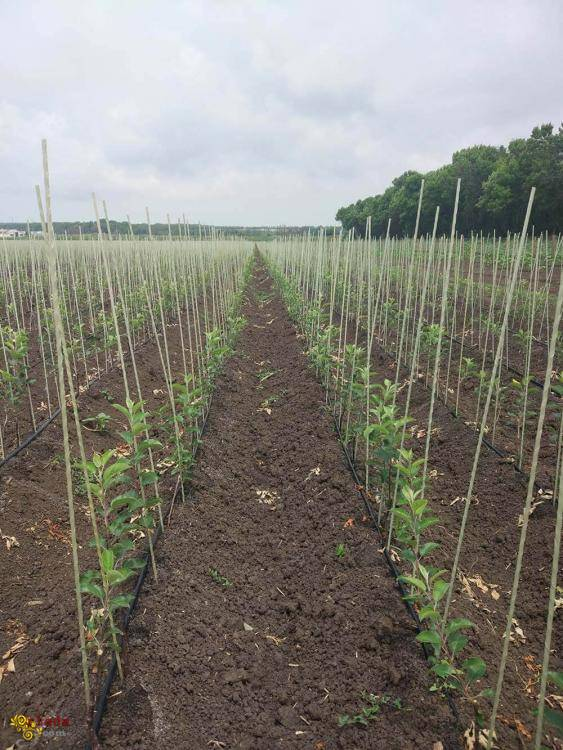 Опоры для растений, колышки для растений из композитных материалов POLYARM - фото