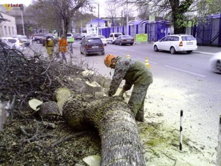 Спиливание,кронирование,фитосанитарн/аварийная подрезки,валка деревьв - фото