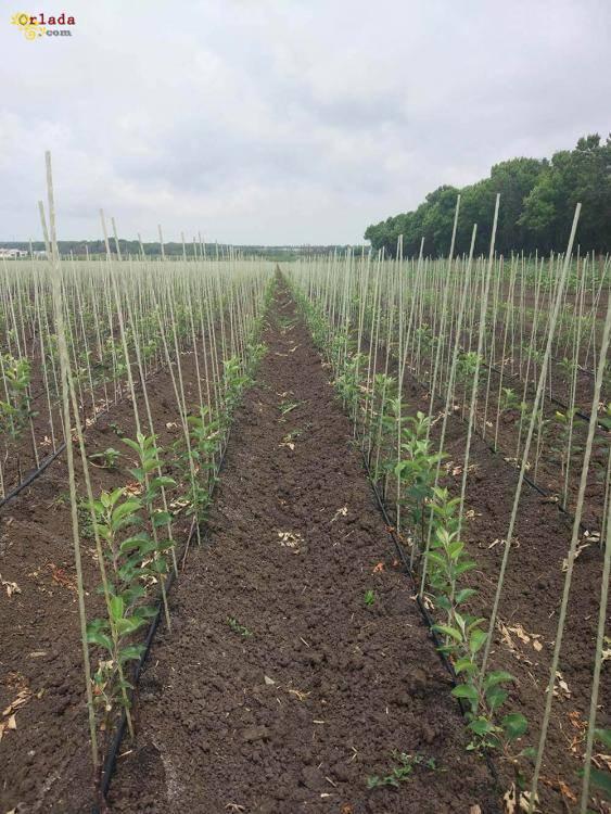 Опоры и колышки для растений из композитных материалов POLYARM - фото