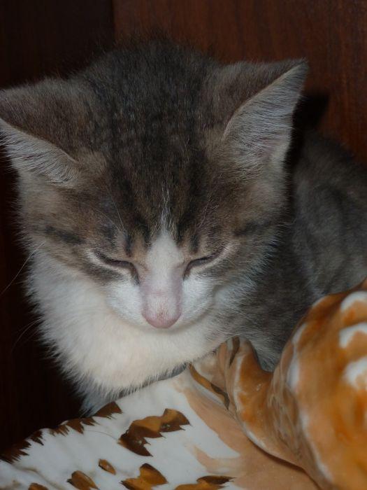 утеряно котика - фото