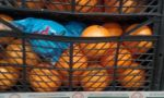 Томати, перець, мандарини, виноград – постачання з Туреччини. - фото 1