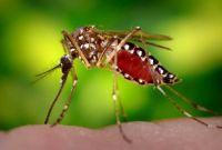 Уничтожение насекомых, грызунов - фото 0