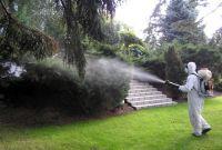 Уничтожение насекомых, грызунов - фото 3