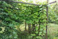 Ділянка прямокутна 20*30 м. Розташована в Новій Українці - фото 1