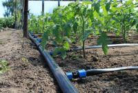 ✅  Агро Центр «B&S Product» || Купить семена Каланчак || Капельное Орошение. - фото 1