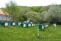 Пчеломатки карпатка. Бджоломатки карпатка - фото 5