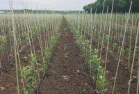 Опоры для растений, колышки для растений из композитных материалов POLYARM - фото 3