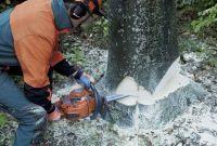 Спиливание,кронирование,фитосанитарн/аварийная подрезки,валка деревьв - фото 0